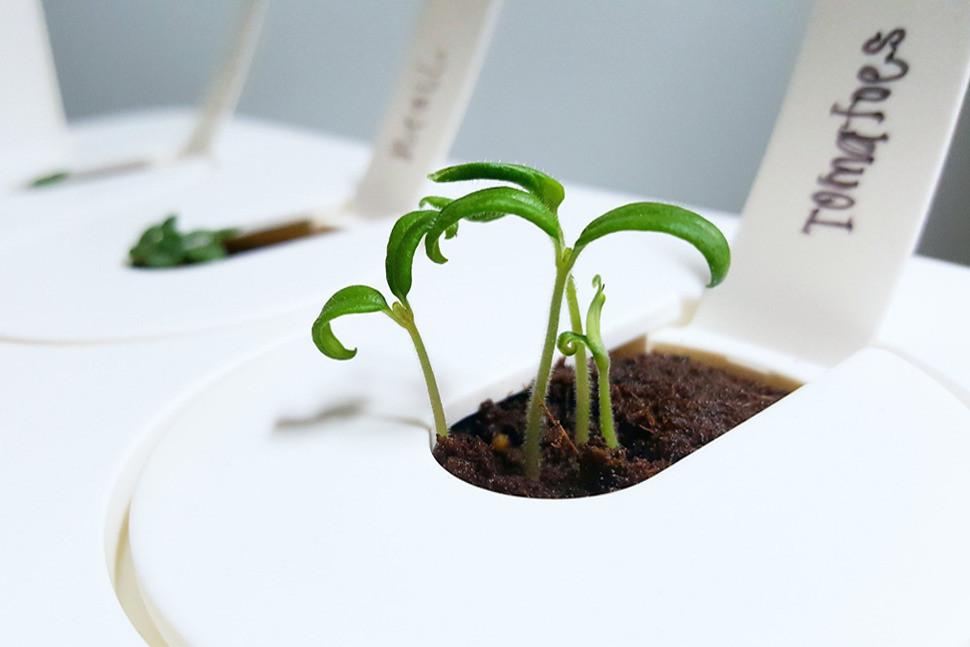 Akıllı Bitki Sistemleri